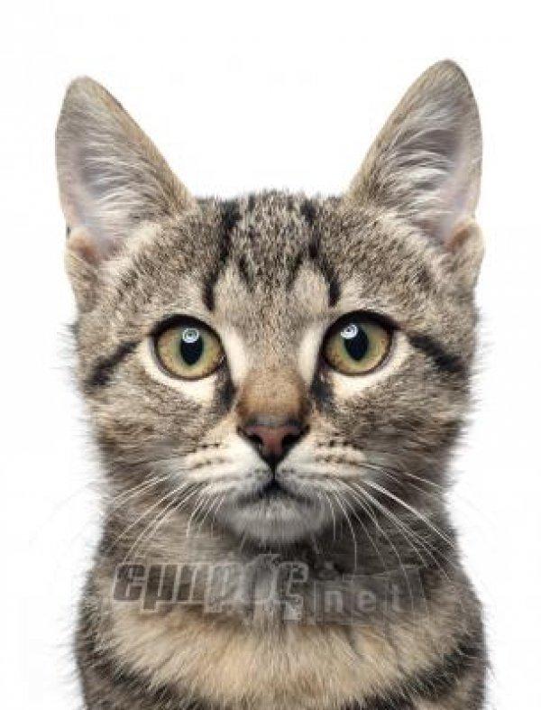 a4cab1bffd79 Ίκτερος στη γάτα - EmprosNet.gr