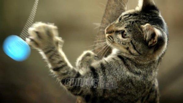 0e5ff0194049 Άσθμα στη γάτα  Ευπαθείς οι νεαρές «σπιτικιές» - EmprosNet.gr