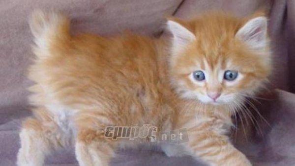 f6530eb41624 Kρατήστε τη γάτα σας δροσερή το καλοκαίρι - EmprosNet.gr