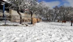 H μεγάλη αύξηση της τιμής των ζωοτροφών, απειλή για τους κτηνοτρόφους και τους καταναλωτές
