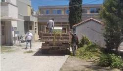 Κοπή χόρτων στο Βοστάνειο
