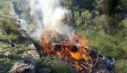 Φωτιά στον Γαϊδαρανήφορο