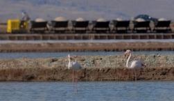 Εκπαιδευτική Δράση «Μια δράση για τη Λέσβο – Παγκόσμιο Γεωπάρκο UNESCO»