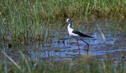 Εξόρμηση παρατήρησης πουλιών στην Αλυκή Καλλονής