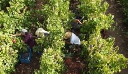 Ενίσχυση δεξιοτήτων αγροτών