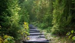 Κατάρτιση και κύρωση δασικών χαρτών