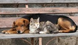 Περιθάλφθηκαν 150 ζώα τον Νοέμβριο στο Κέντρο Περίθαλψης Αδέσποτων Ζώων Δήμου Μυτιλήνης