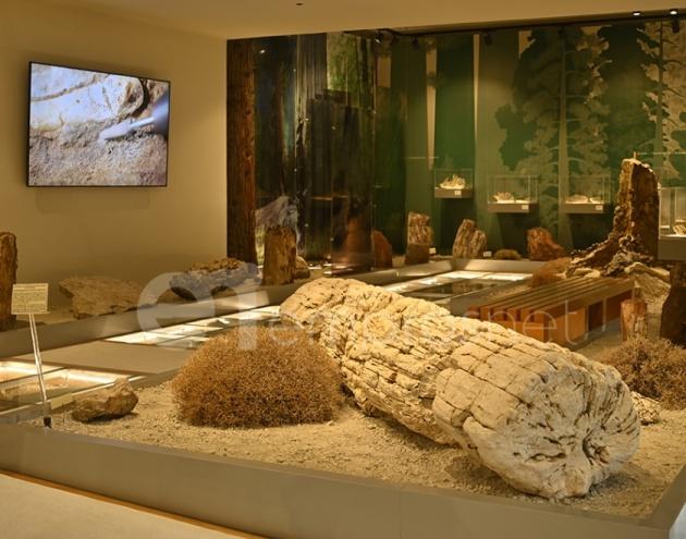 Μια μέρα στο Μουσείο Φυσικής Ιστορίας του Απολιθωμένου Δάσους Λέσβου [Vid & Pics]