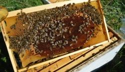 Ξεκίνησαν προγράμματα αντικατάστασης κυψελών και μετακινήσεων μελισσοσμηνών