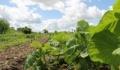 Καταβλήθηκαν προκαταβολές για όλες τις προσκλήσεις του 2020 για βιολογική γεωργία – κτηνοτροφία
